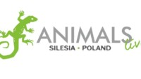 Giełda terrarystyczna w Świętochłowicach Animals Live