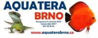 [Czechy - Brno] Aquatera Brno