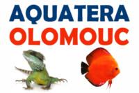 [Czechy - Ołomuniec] Aquatera Olomouc
