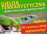[Rybnik] GIEŁDA PRZENIESIONA - Giełda Terrarystyczna w Rybniku i Pokaz Zwierząt Egzotycznych