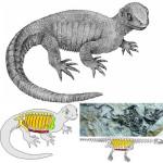 Nowe znalezisko potwierdza przynależność żółwi do diapsydów