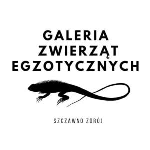 ✅ [Szczawno-Zdrój] Giełda terrarystyczna w Szczawno Zdroju