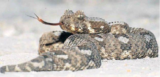 Pierwszy na świecie rezerwat dzikiej przyrody – dla węża!