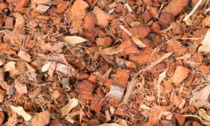 Drewienka bukowe i inne niebezpieczne podłoża w terrarium