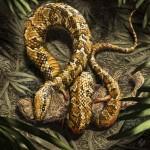 Odnaleziono skamieniałości czworonożnego węża!