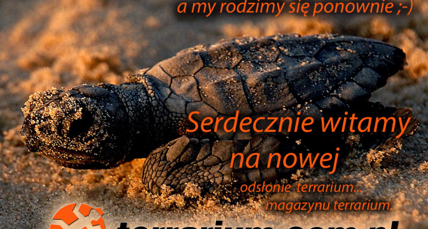 Nowa odsłona terrarium.com.pl, czyli magazyn terrarium!
